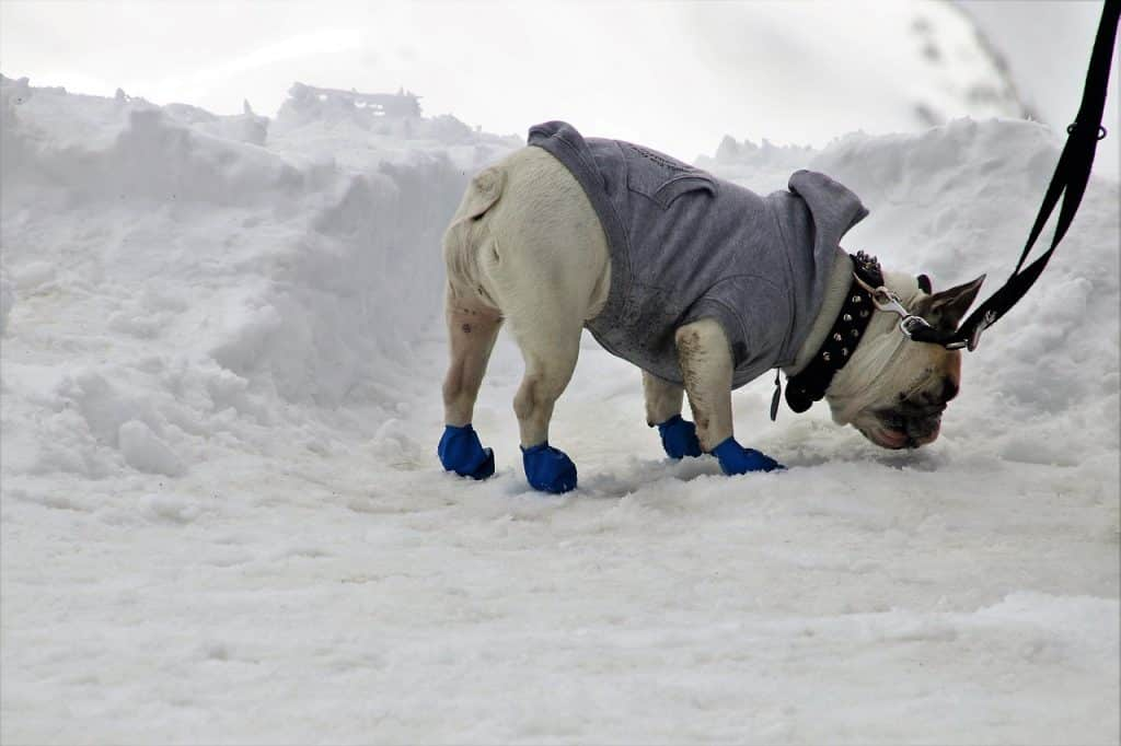 dog booties standing in snowy place