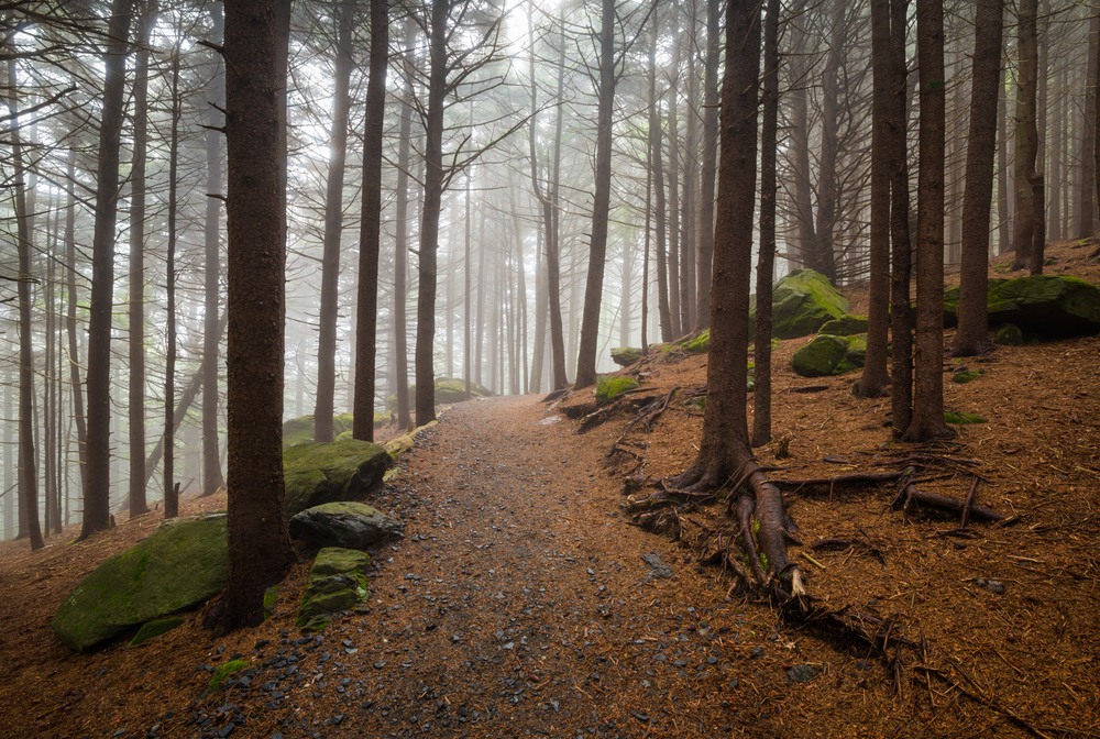 What is the Most Dangerous Part of the Appalachian Trail What is the Most Dangerous Part of the Appalachian Trail?